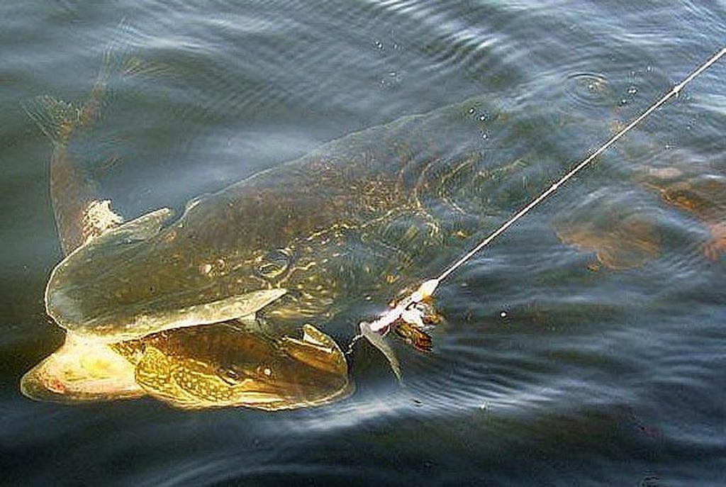 где можно ловит рыбу на дону